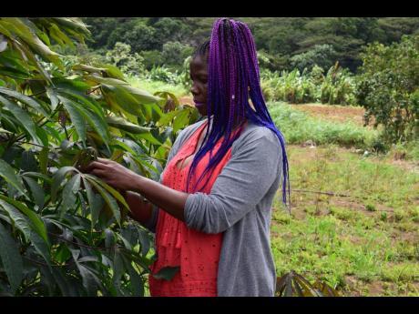 News – Agro Invest